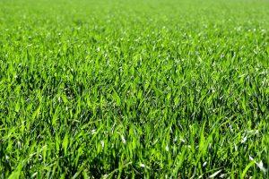 meadow-2184989_640
